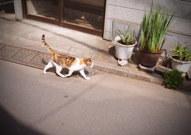 東向島の猫