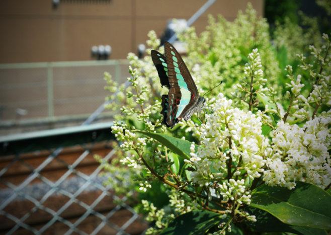 蝶々の写真