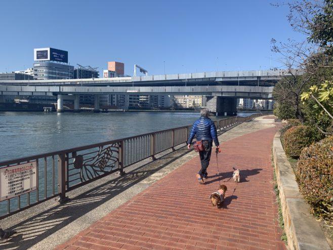 隅田川沿いのテラス